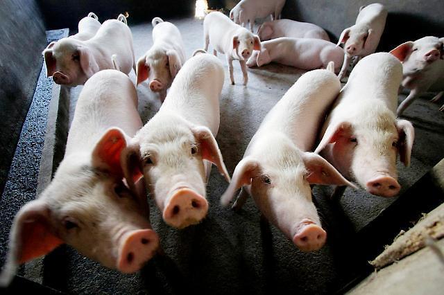 미국, 중국산 돼지고기 454톤 전격 압수