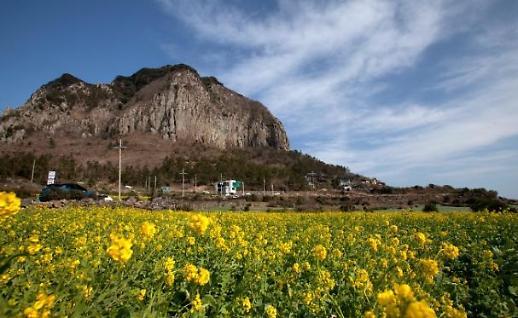 Lượng du khách đến đảo Jeju ngày càng giảm