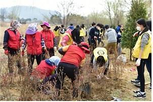 인천시, 제74회 식목일 나무심기 행사 3월30일 실시