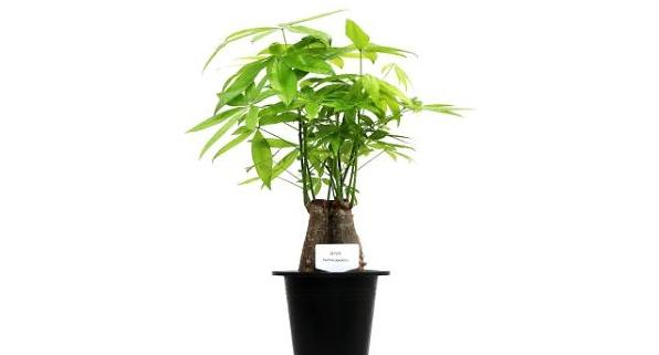 식물이 미세먼지 25%를 줄인다?