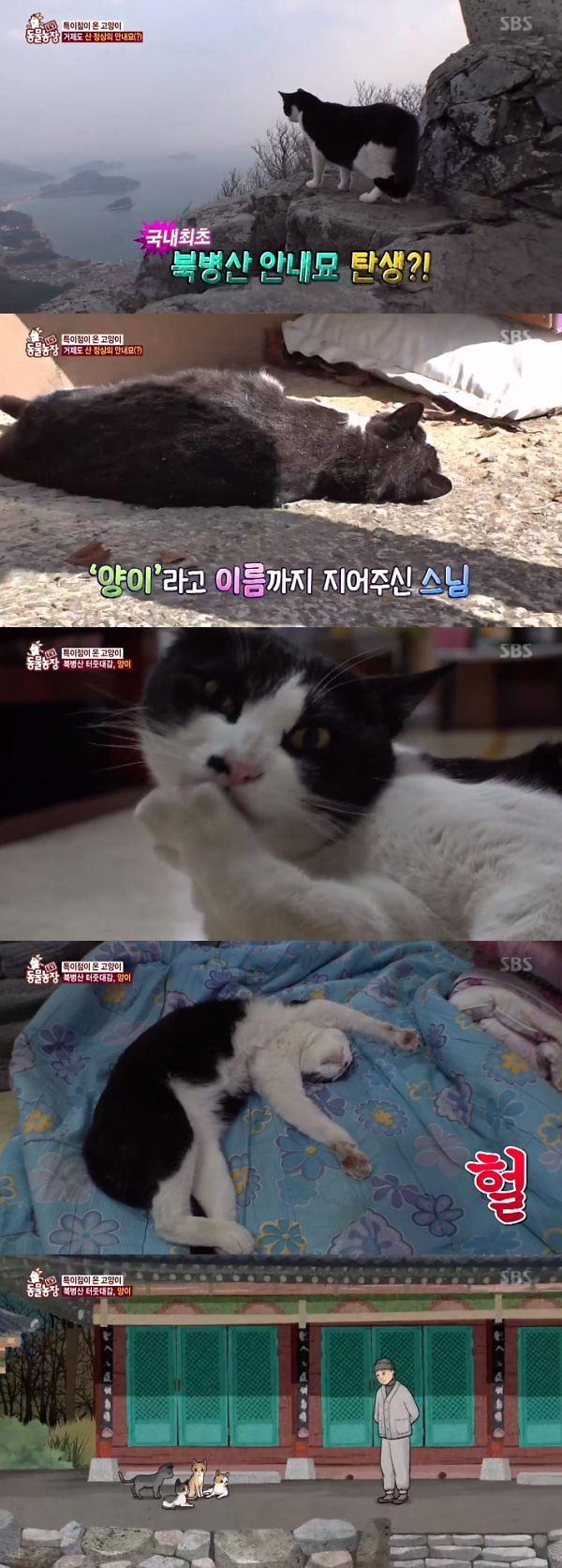 동물농장 북병산 고양이 양이 화제…북병산은 어디?