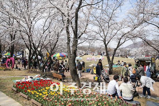 의왕시 2019 의왕시청 벚꽃축제 성황리 마쳐
