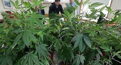 [장변의 로·컨테이너] 혐의 벗기 어려운 마약 범죄