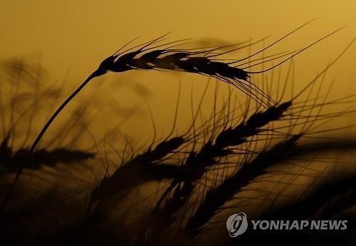 미국, 또 중국 이겼다...中곡물 관세할당제 관련 WTO 승소