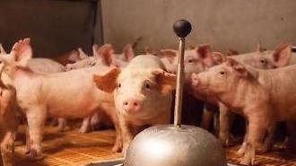 중국발 돼지열병 확산...단백질 파동 온다