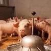 """中国発のアフリカ豚コレラ拡散・・・""""「タンパク質波動」やってくる"""""""