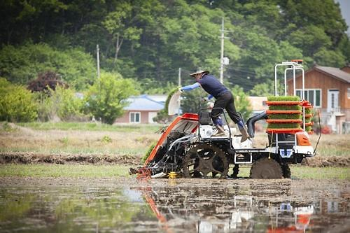 SK Telecom commercializes IoT network-based autonomous rice transplanter for first time