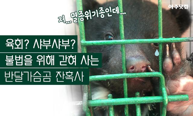 [슬라이드 뉴스] 육회? 샤부샤부? 불법을 위해 갇혀 사는 반달가슴곰 잔혹사