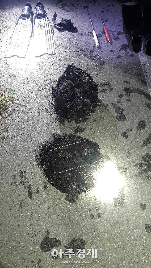포항해경, 마을 공동어장 전복 93마리 채취한 절도범 2명 검거