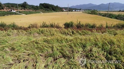 [농식품부-아주경제 공동기획]태풍 한번에 무너지는 농심…농업재해보험 대폭 강화