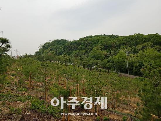 성남시 녹지공간 만드는 도시 숲 조성사업 편다