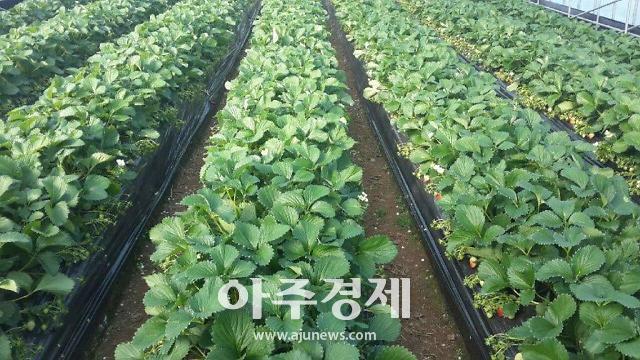 홍성군, 농가 소득 대체 농축산 가공품 개발 사활 걸다!