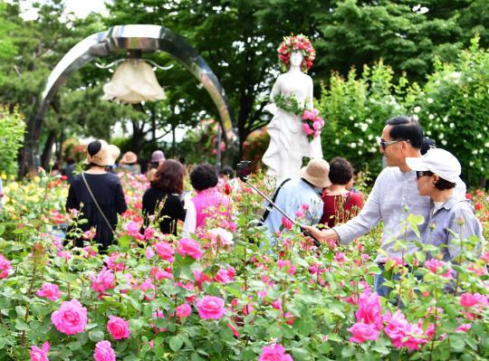 로맨틱한 2019 서울장미축제