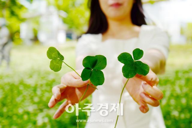 경주엑스포, '네잎클로버를 찾아라' 이벤트 진행