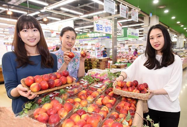 [talk talk 생활경제] 농협유통, 올해 첫 출하 천도복숭아 판매