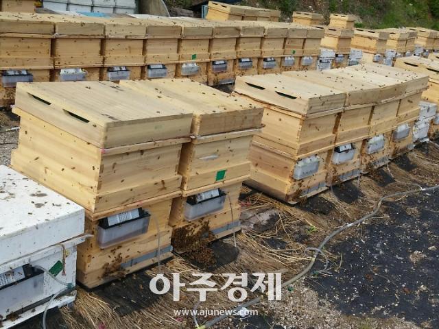 경남도, 토종벌 육성 양봉 지원 계획 수립