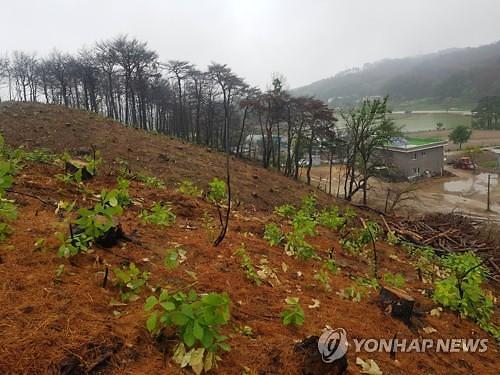 산림청, 태풍·집중호우 대비 산사태 방지 회의