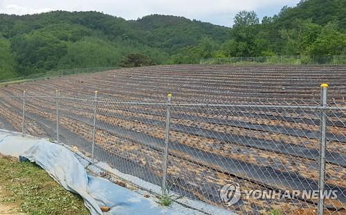 북한 접경 특별관리지역 긴급방역…돼지열병 혈청검사 음성