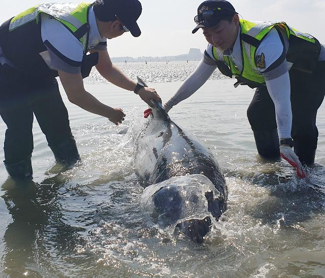 [포토] 멸종위기 돌고래 구출작전