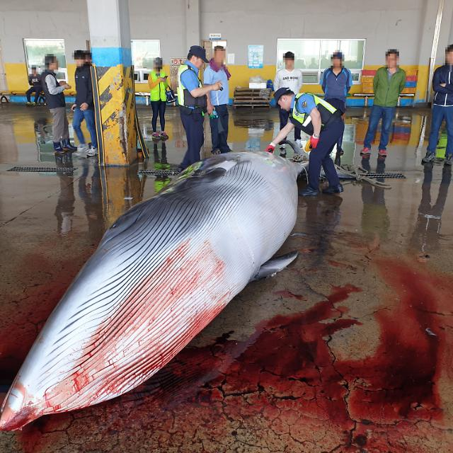 [FOCUS] Whale meat consumption draws attention after Japans resumed commercial whaling