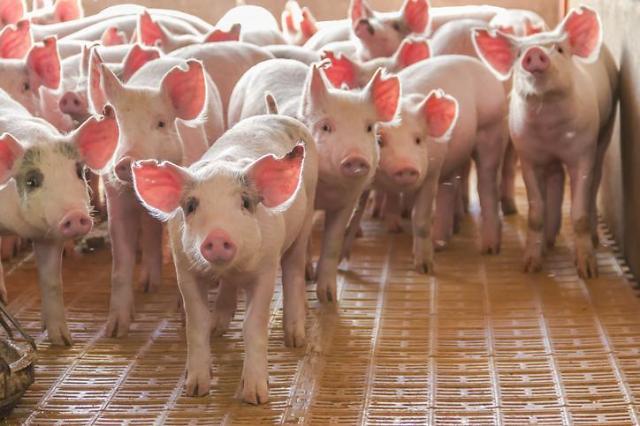 [NNA] 中 국무원, 아프리카 돼지 콜레라 확산 방지 지시