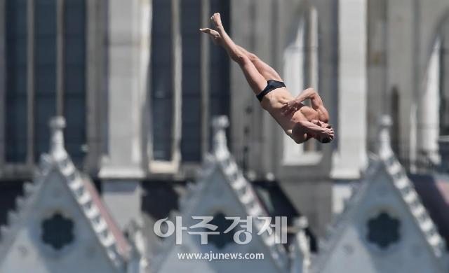 광주세계수영대회 경기장에 애완견 N0