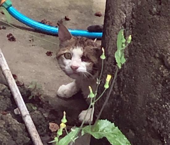 [포토] 군산서 머리에 못 박힌 고양이 발견