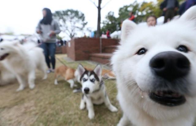 韩今夏可携宠物入住旅店数达3年前10倍