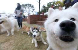 .韩今夏可携宠物入住旅店数达3年前10倍.