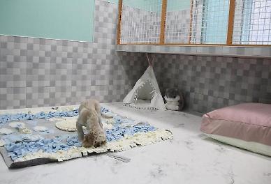 Pet-friendly accommodation business enjoys boom in S. Korea