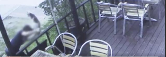 '경의선 숲길 고양이 살해' 30대 남성, '기소의견'으로 검찰 송치
