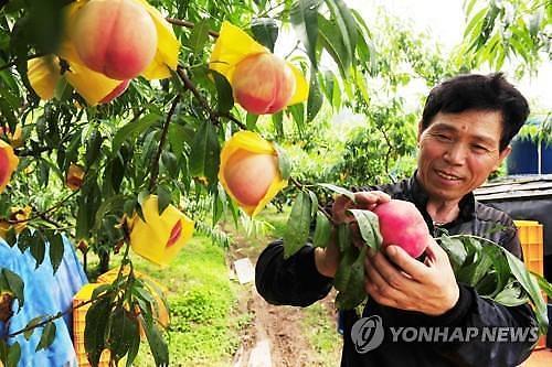 有原因的洋葱风波……38年来桃、洋葱进口增长8%