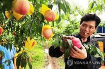 理由のある玉ねぎ騒ぎ・・・38年間、桃・玉ねぎの収入8%増加