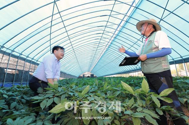 농진청, 터널식 해가림 인삼재배시설 확대 나선다