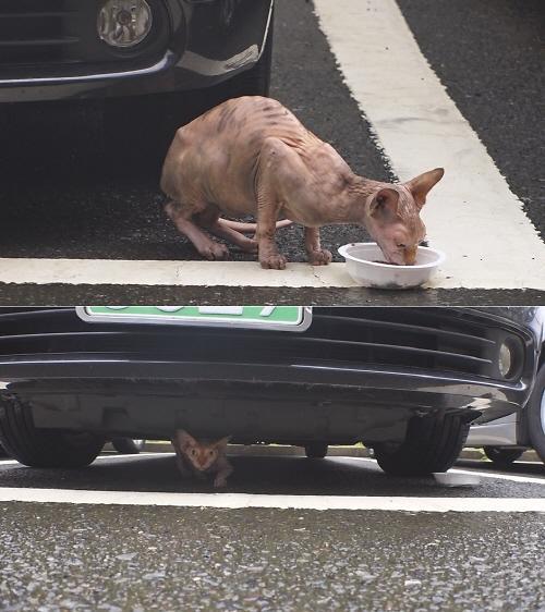 스핑크스 고양이 가격 얼마길래 화제? #동물농장…애니멀 호더란?