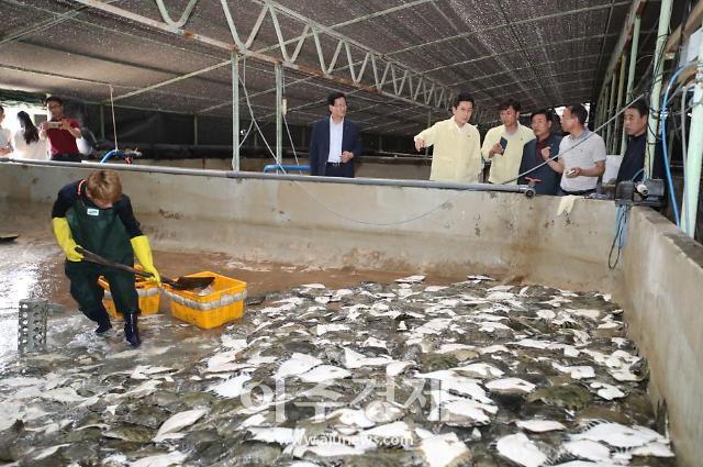 포항시, 고수온 피해 양식장 늘어...양식어류 피해 최소화 비상