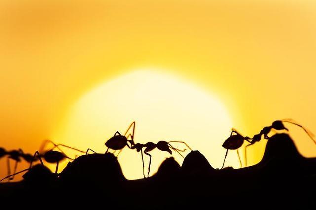 [현장에서/이보미] 국회가 개미에 해줄 일