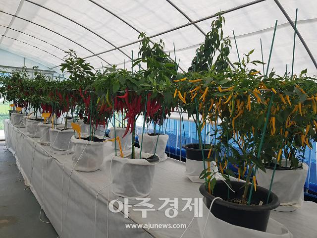 청양군, 30일 세계고추․산야초 품종전시관 오픈