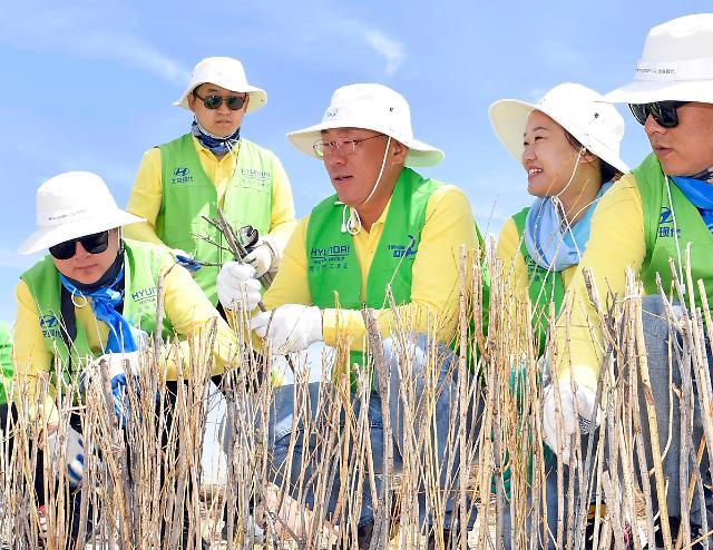 정의선 현대차 부회장, 중국 사막화 방지 봉사활동으로 현지 스킨십 강화
