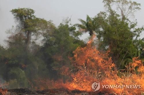 브라질, 환율방어 등 경제 대응...아마존 화재 영향 변수