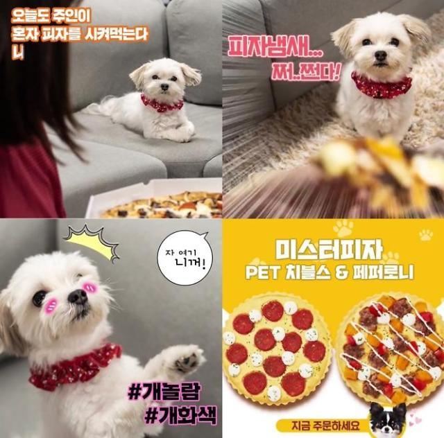 [이서우의 Pick味] 강아지·고양이 전용 피자, 제가 먹어봤습니다