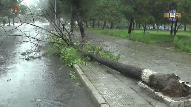 朝鲜全力推进台风灾后恢复工作