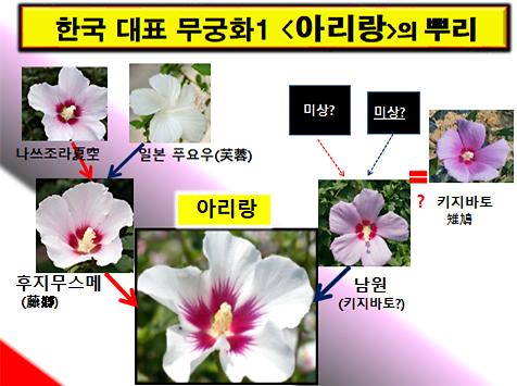[강효백의 新경세유표 12-24] 품종으로 본 '무궁화=왜국화'스모킹건 12선(下)