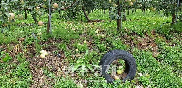 태풍 링링으로 경북 농작물 피해 65.5㏊로 늘어
