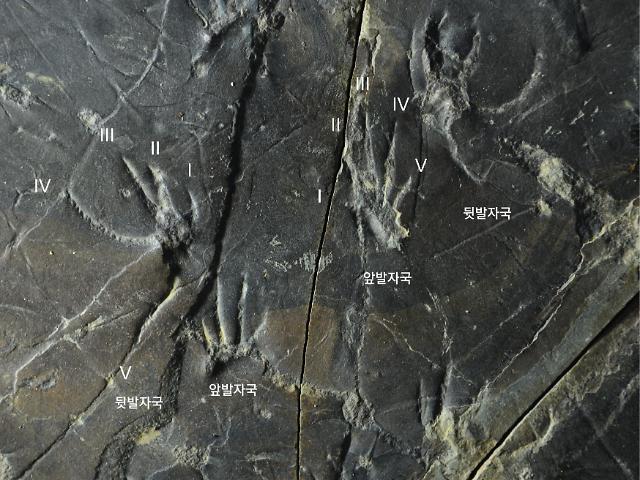 진주교대 지질유산연구소, 백악기 도마뱀 화석 연구 美 학술지 발표