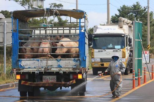 [포토] '철저 방역'.. 돼지 운송 차량 소독하는 관계자