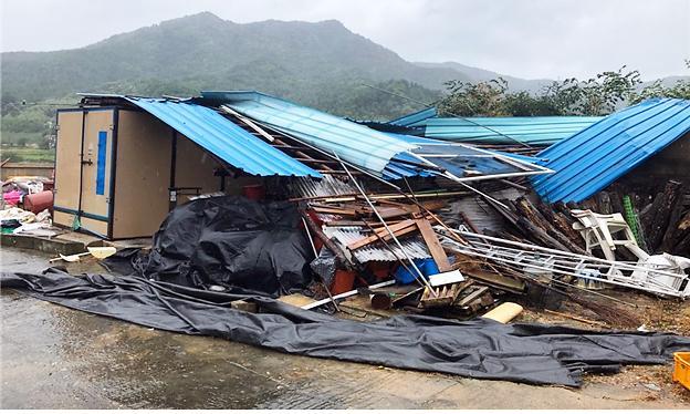 [슬라이드 화보] 물폭탄·강풍 몰고 온 태풍 타파에 인명·재산피해 속출