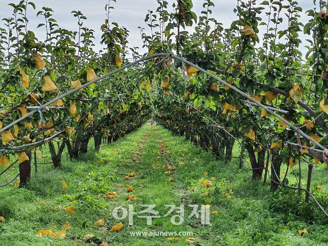 태풍 '타파'로 경북 14개 시·군 농작물 380.3㏊...농업시설 20.4ha 피해