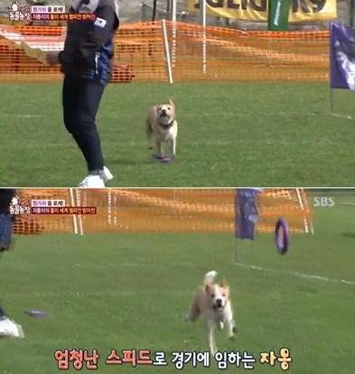 동물농장 자몽이, 왜 화제? 점핑1위, 러닝 5위로 상당한 실력
