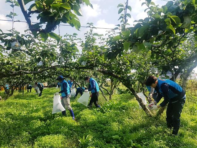 농어촌공사 상주지사, 태풍낙과 피해농가 봉사활동 전개